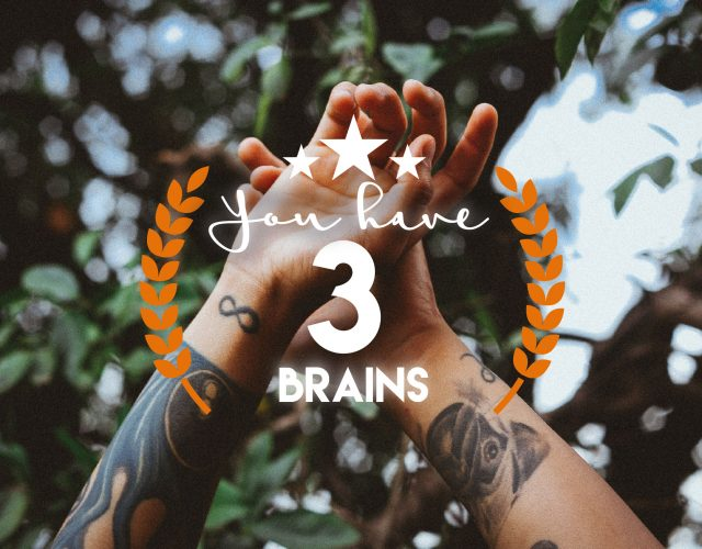 You have 3 brains (yes, 3!)